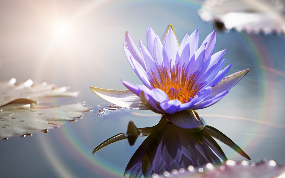 Soulful activities for reflection of the new now